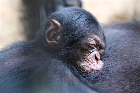 Help name our new baby chimp